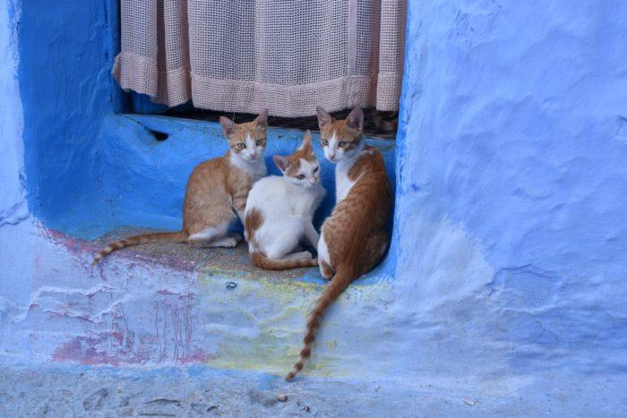 Chefchaouen-la-città-blu-del-Marocco-gatti