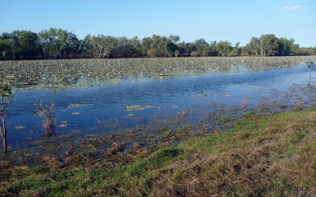 Lomareium-Lagoon