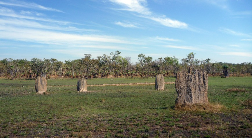 Termite-Mounds-2