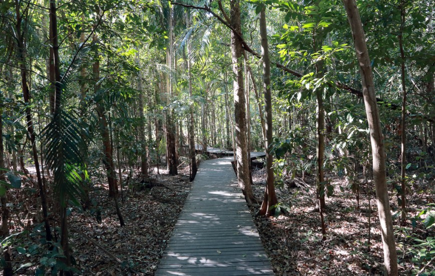 Wangi-Boardwalk