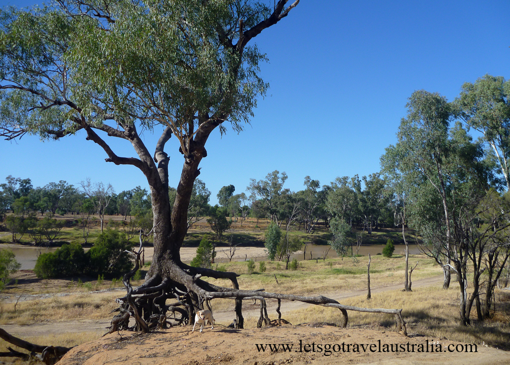 Camp-area-at-Balonne-River-St-George-5