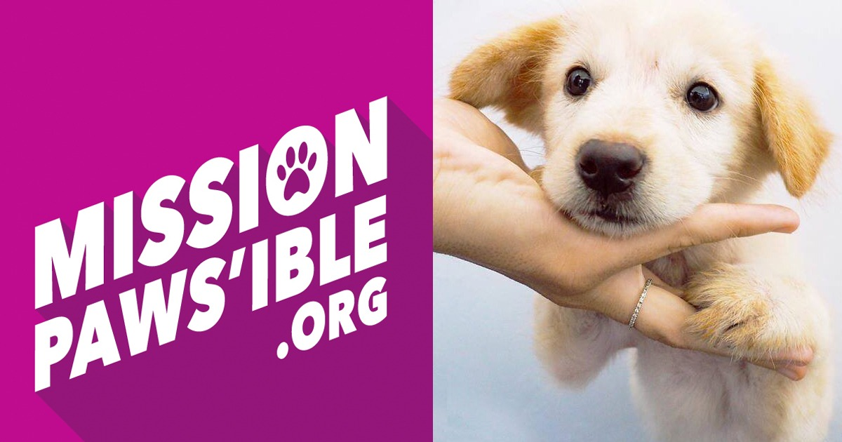 Mission Pawsible release beautiful new video series