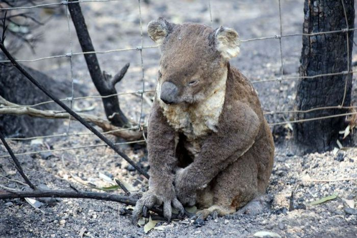 We need to care as much about a Cow as a Koala