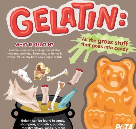 What is gelatin?