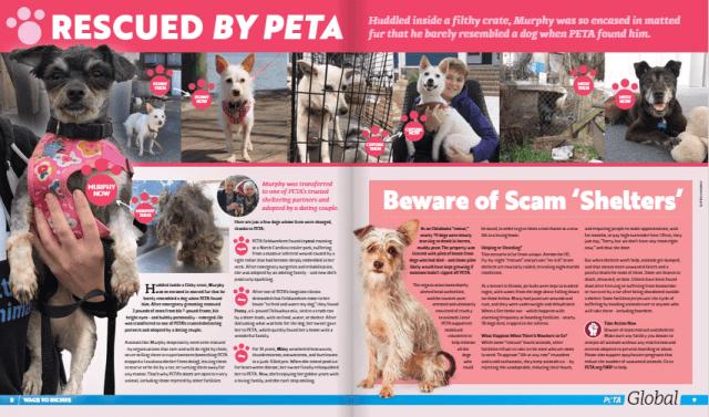 PETA Global Magazine - Second Edition
