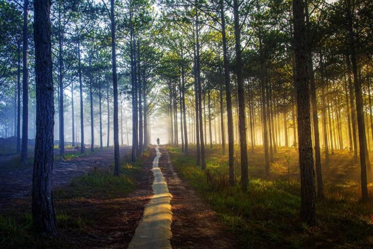 sunshine through forest