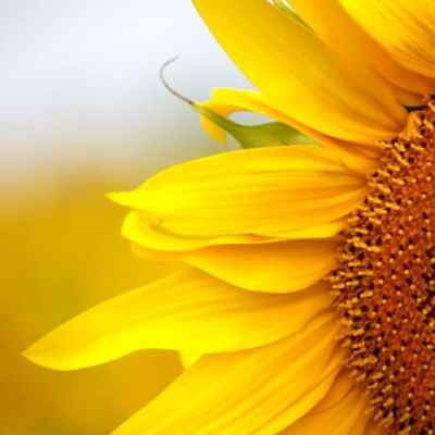 The ULTIMATE Kids' Garden — How to Build a Sunflower Fort With Your Family