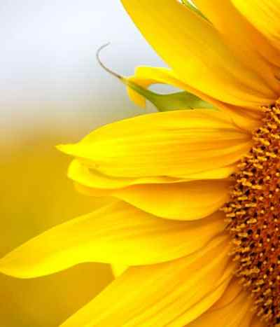 How to Create a Sunflower House *This garden fort is awesome. Saving this for later.