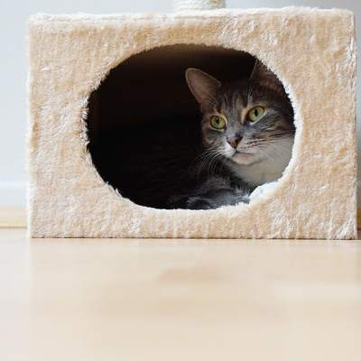 7 Astoundingly Helpful Tips for Moving Cats into a New Home