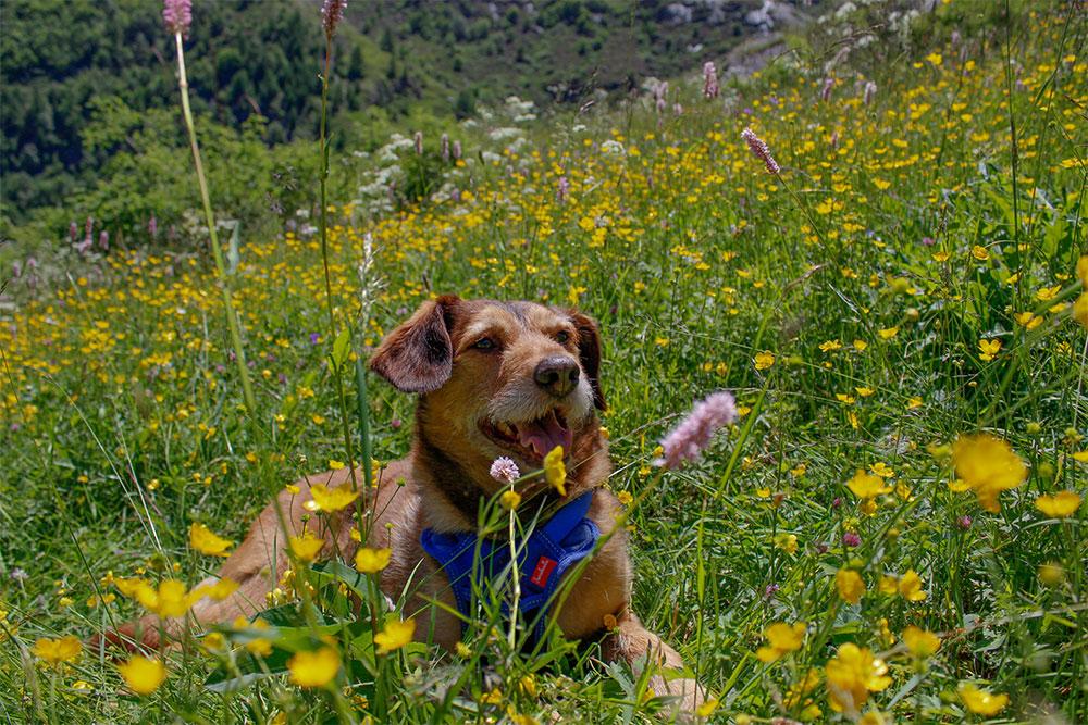 Cani al Parco del Gran Paradiso