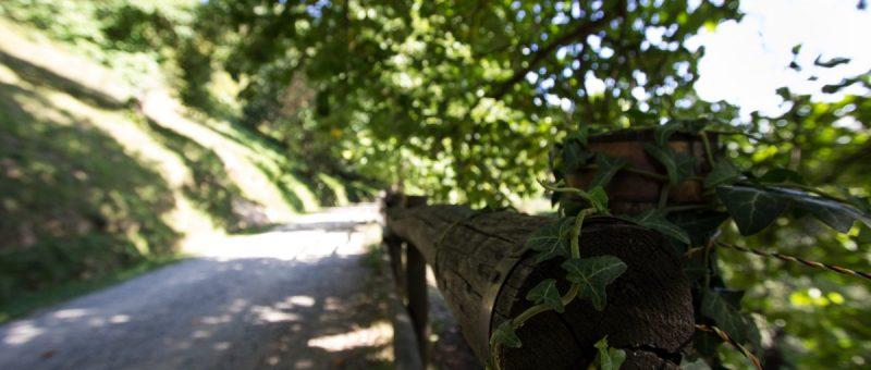 Parco Burcina di Pollone, Biella