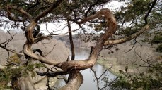 Check out this view of the Maquoketa River behind this gnarly Juniper tree! This was just a few minutes walk from Wade's primitive campsite at Buzzard Ridge Wildlife Management Area.
