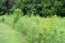 Phipps Prairie Park - Both trails meet in a prarie in the middle.
