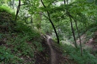 Stephens Park - Be sure to keep and eye out for other using the trail, since it can be narrow in some places.