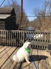 Kaia sitting on wooden bridge near mill at Wildcat Den Park (head cocked)