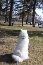 Kaia watching other doggos at the entrance to Wildcat Den Park