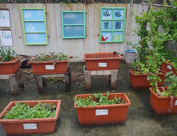 圖片說明/圖為好蟾蜍工作室為蟾蜍山所作之社區營造-呱呱菜園,提供居民動手種菜,回歸以往記憶中的農家樂。