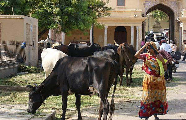 圖片來源/Wesley Chen-又見印度神牛 via Flickr