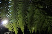 fern and light