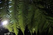 fern and light