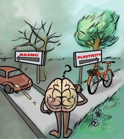 aging or neuroplasticity