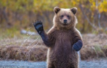 The Rev - Bear
