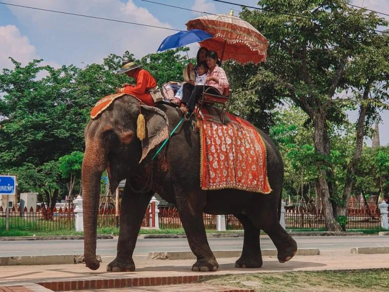 Elephant trekking in Hua Hin Thailand.