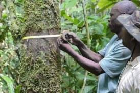 Congo: pourquoi démocratiser l'accès aux ressources forestières de la Sangha