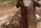 Centrafrique : «Affaire destruction des biens privés et immobiliers à Ngaragba»: une pauvre mère s'interroge de sa position dans le pays du Gangster de Bangui !