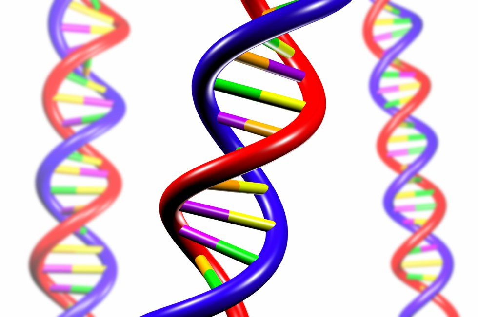 Illustration of the DNA double helix in red, blue, purple, yellow, orange, and green. There is a main spiral in the center and two faded spirals on the left and right.