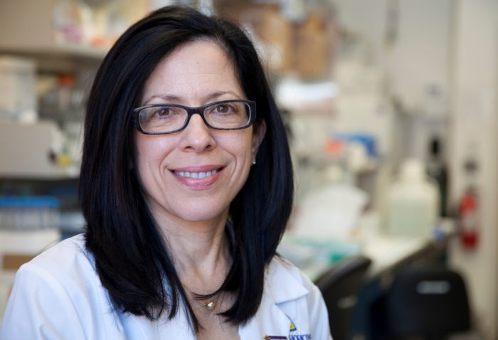 Scientist Elizabeth Jaffee Named President-Elect Of The American Association For Cancer Research