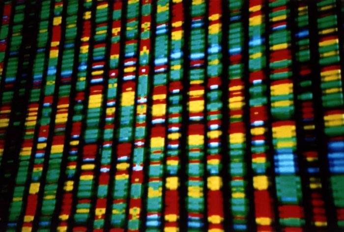 image of DNA showing vertical columns with stripes of green, glue, red, yellow and white.