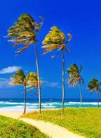 palm-trees-blowing