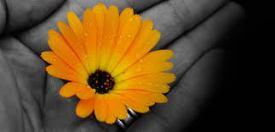 grateful-daisy