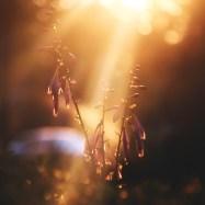 light-shine