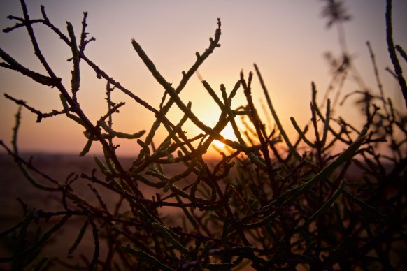 sunset though a bush