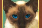 L'album de la semaine : Chesire Cat - Blink-182