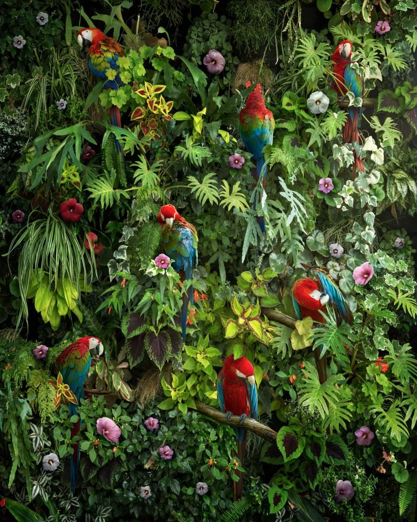"""""""Canopy"""", une nouvelle image à grande échelle créée comme un diptyque, présentant une vision hautement stylisée et modelée de la canopée de la jungle, avec des plantes tropicales, des fleurs d'hibiscus et des aras rouges. Avec cette pièce, mon plan était de construire une image composite photographique qui incorpore une composition très centrée sur le design, presque comme du papier peint vivant. Je voulais créer une image magnifique et captivante qui attirerait également l'attention sur ces habitats naturels en voie de disparition rapide. Nick Pedersen"""