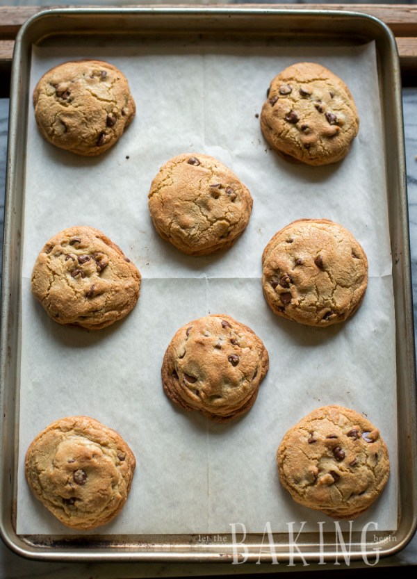 Baked chocolate chip cookies with chocolate chip morsels on a baking sheet.