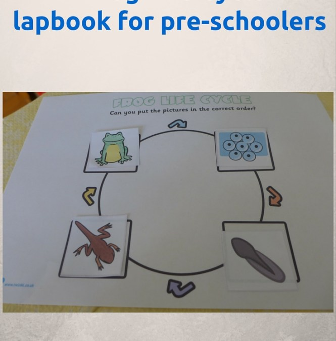 frog life cycle lapbook
