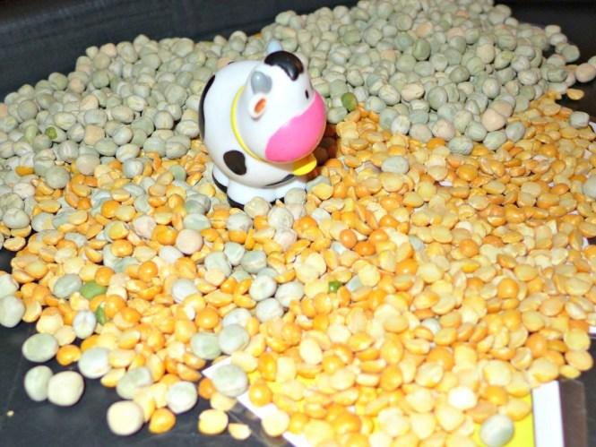 farm and food tuff spot activity