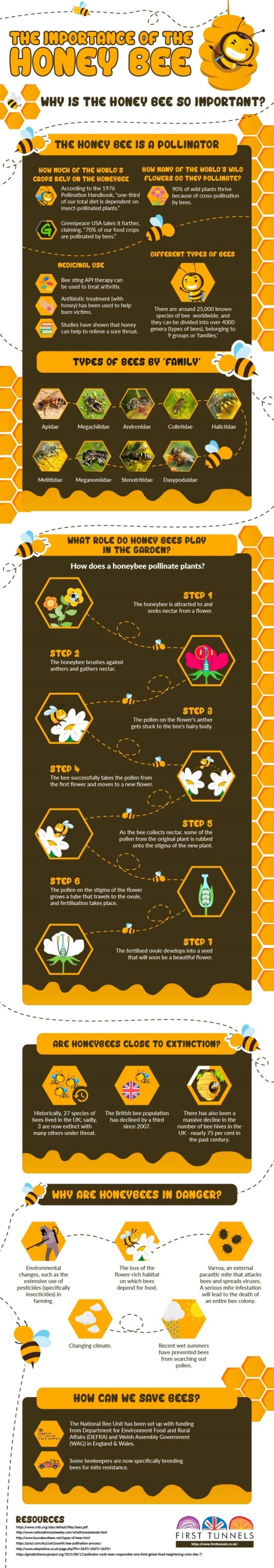 The Importance Of The Honey Bee