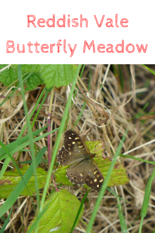 buttefly meadow at Reddish Vale