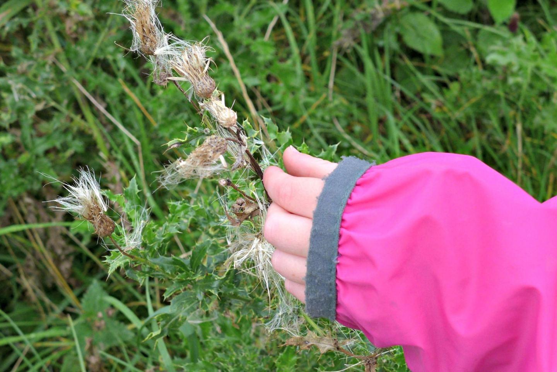 ENWC Seed Dispersal 4