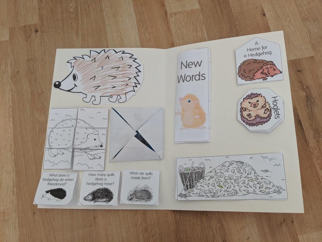 Hedgehog Lapbook Resources