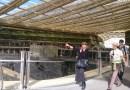 La Canopée des Halles.. Majestic…