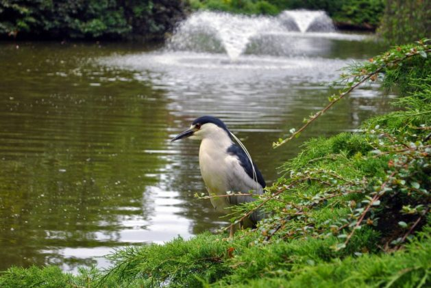 Shrewsbury, Inghilterra: Dingle, parco, fauna