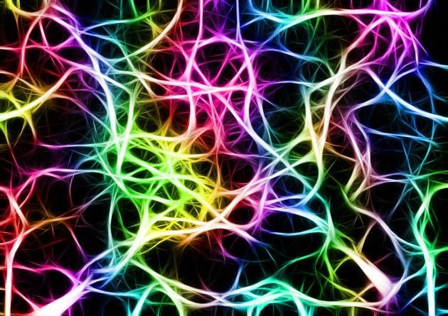 neurones meditation