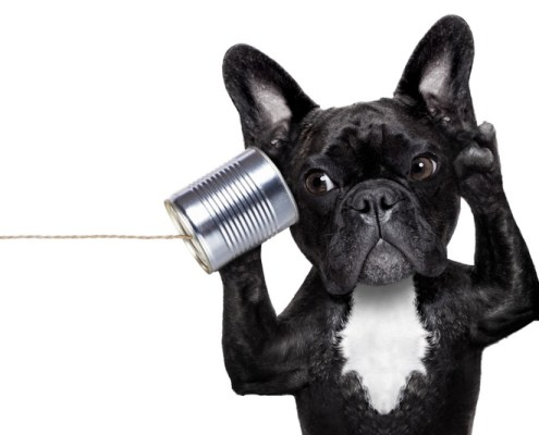 Dog with a telephone | Ways to be Heard