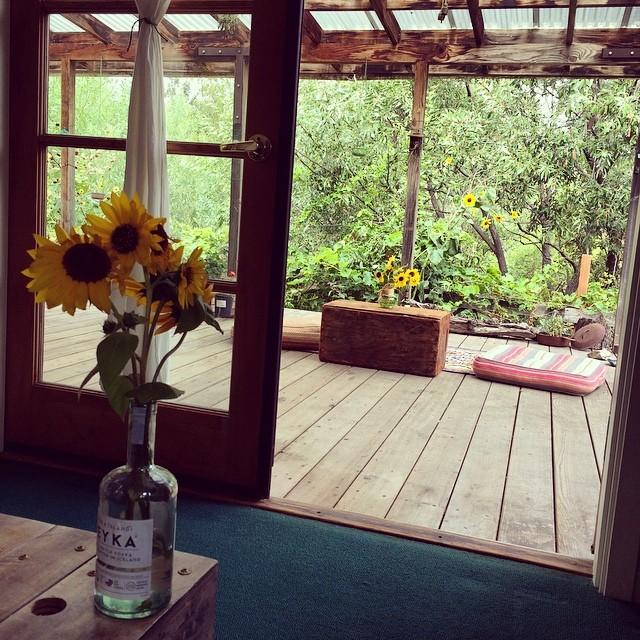 #sunflower season